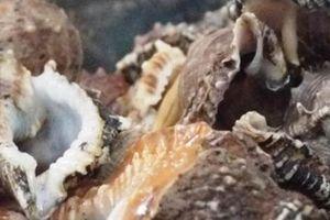 Loài ốc sần sùi, xoáy 7 tầng, trông đáng sợ không ngờ là đặc sản