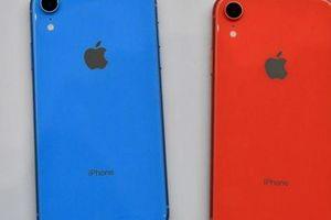 Đây chính là hình ảnh những màu sắc mới mẻ trên iPhone 11R