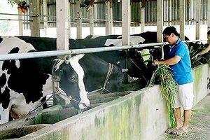 Tái cơ cấu ngành chăn nuôi, chú trọng gia súc ăn cỏ