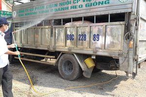 Nhiều hộ chăn nuôi nhỏ lẻ vẫn chủ quan trong việc phòng chống dịch tả heo châu Phi
