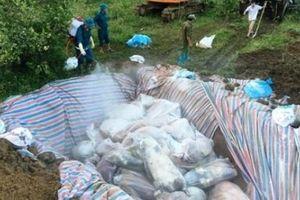Dịch tả lợn Châu Phi diễn biến phức tạp tại Thanh Hóa