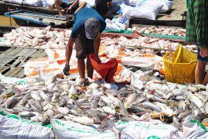 Sau nhà máy AB Mauri gây hôi khắp vùng, hàng chục tấn cá chết trắng sông