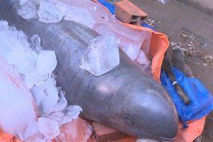 Bắt được cá hiếm nặng 150kg, ngư dân đòi 100 triệu mới giao xác