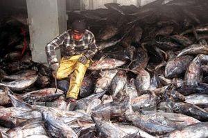Chống đánh bắt cá trái phép - thách thức không nhỏ với ASEAN