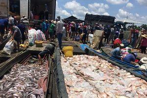 Đồng Nai: Cá nuôi bè lại chết trắng trên sông La Ngà
