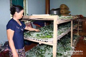 Cho tằm ăn lá sắn lớn nhanh như thổi, bỏ ra trăm ngàn lãi cả triệu