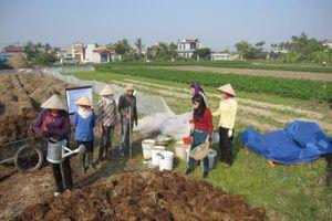 Thu gom, xử lý, sử dụng phụ phẩm cây trồng