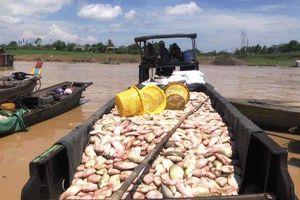 Điều tra vụ cá bè chết trên sông La Ngà