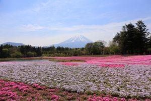 4 lí do khiến bạn xách ba lô du lịch Nhật Bản ngay mùa hè