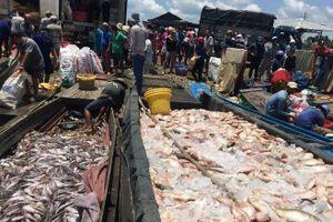Cá chết trắng sông, dân bán nhà trốn ô nhiễm, ngành TN&MT, địa phương ở đâu?