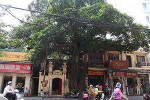 Kỳ lạ cây đa trăm tuổi với bộ rễ 'khổng lồ', chuyển màu trắng mỗi khi trời mưa ở Hà Nội