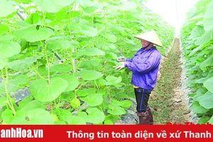 Huyện Thọ Xuân phát triển nông nghiệp theo hướng nâng cao giá trị kinh tế