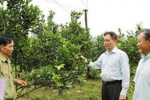HLV Hà Giang tập huấn xây dựng 'Vườn an toàn và hiệu quả'