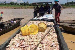 Cá sông La Ngà chết, Sawaco nói gì về nguồn nước cho TP.HCM?