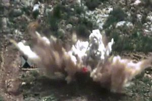 Chiến tranh cận kề, Mỹ 'dằn mặt' Iran bằng video 'sát thủ diệt boong ke' mạnh nhất