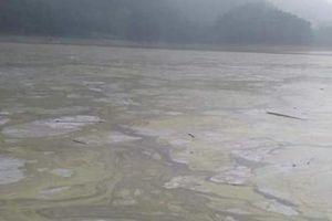 Thái Nguyên: Dân kêu cứu vì hồ nước đẹp nhất tỉnh bị ô nhiễm do nuôi cá lồng