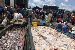 Bộ Tài nguyên và Môi trường đề nghị xác định nguyên nhân cá chết trên sông La Ngà