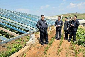 Hàn Quốc quyết định chi 8 triệu USD cho dự án quốc tế cứu trợ Triều Tiên
