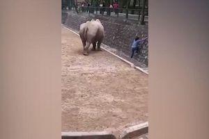 Người phụ nữ liều mạng leo vào chuồng tê giác để nhặt điện thoại