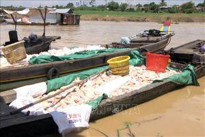 Khẩn trương xử lý và xác định nguyên nhân tình trạng cá chết trên sông La Ngà-Đồng Nai