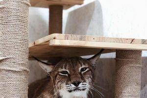 Sở thích nuôi thú cưng tiền tỷ và cách thuần phục loài động vật hoang giã của 9X chuyển giới