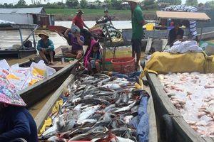 Nguyên nhân nguồn nước ô nhiễm khiến hàng trăm tấn cá chết nổi trắng sông La Ngà