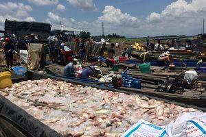 Hàng trăm tấn cá chết trên sông ở Đồng Nai: Vì đâu nguồn nước ô nhiễm bất thường?