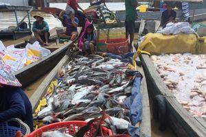 Xác định nguyên nhân hàng trăm tấn cá chết trên sông ở Đồng Nai