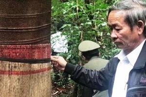 Có gì quý giá ở khu rừng nguyên sinh bé tí của làng Đông Dương?