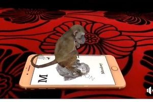 Học cùng con bằng công nghệ thực tế ảo Animal 4D + gây sốt cộng đồng mạng