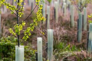 130.000 cây được trồng ở các thành phố và thị trấn của Anh