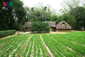 Tháng 5 về thăm làng Sen quê Bác