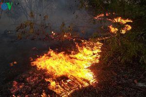 Cháy lớn, hơn 15 ha rừng ven biển Quảng Bình bị thiệt hại