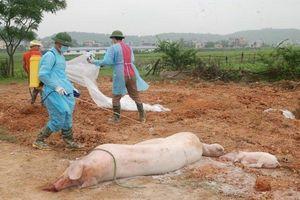 Ban Bí thư ban hành chỉ thị về Tăng cường phòng, chống dịch tả lợn châu Phi