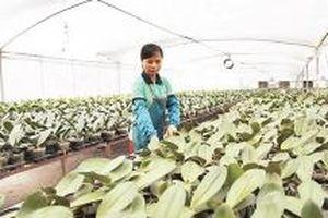 Ðẩy mạnh ứng dụng công nghệ cao trong trồng hoa, cây cảnh