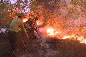 Quảng Bình: Rừng phòng hộ ven biển cháy trên diện rộng
