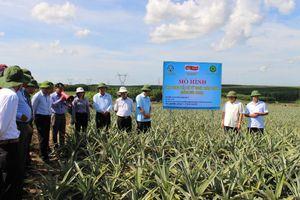 Quảng Trị: Chuyển đổi hơn 627 ha đất lúa thiếu nước sang các hình thức sản xuất cây trồng khác