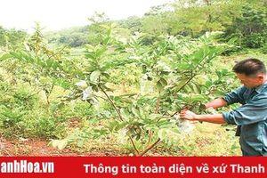 HTX khẳng định vai trò 'bà đỡ' trong sản xuất, kinh doanh trên địa bàn huyện Thạch Thành