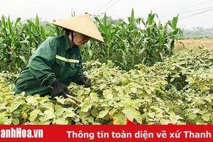 Huyện Tĩnh Gia phấn đấu gieo trồng 6.370 ha cây trồng các loại trong vụ thu mùa