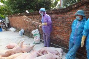 Cử tri lo lắng về dịch tả lợn châu Phi