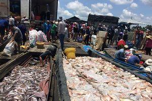 Gần 1.000 tấn cá chết ở làng bè La Ngà sau đêm mưa