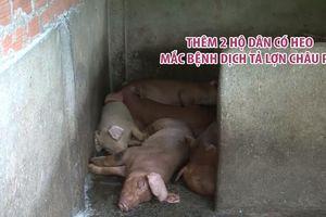 Bình Phước ghi nhận thêm 2 hộ dân có heo dương tính với dịch tả lợn châu Phi