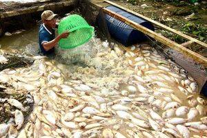 Đồng Nai: 1.000 tấn cá bè chết sau năm ngày