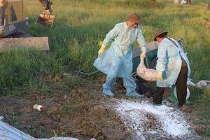 Khẩn trương xác minh thông tin trục lợi từ dịch tả lợn châu Phi