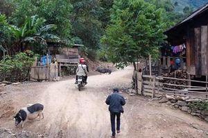 Phát hiện ổ dịch tả lợn châu Phi tại xã biên giới Nghệ An