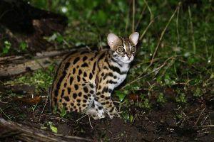 Thả lại môi trường tự nhiên động vật rừng còn sống, khỏe mạnh