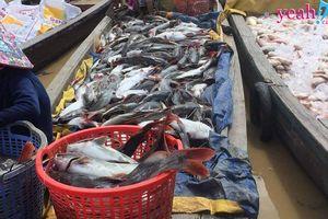 Cá chết trắng trên sông La Ngà, người dân bất lực trắng tay