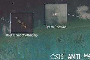 Tàu Trung Quốc quay lại Biển Đông 'săn' sò quý, đe dọa hủy hoại môi trường