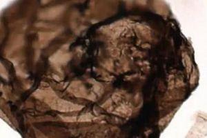 Phát hiện hóa thạch nấm tỷ năm tuổi nguyên vẹn trong đá trầm tích
