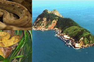 Hòn đảo 'tử thần' đầy rắn độc không ai dám bén mảng